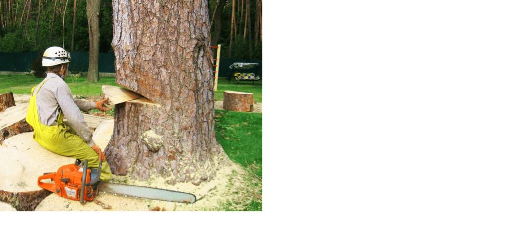 пилка деревьев пилой хуксварна фото