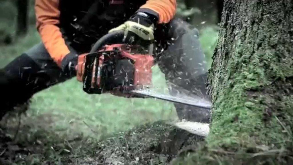 Пила для валки леса фото